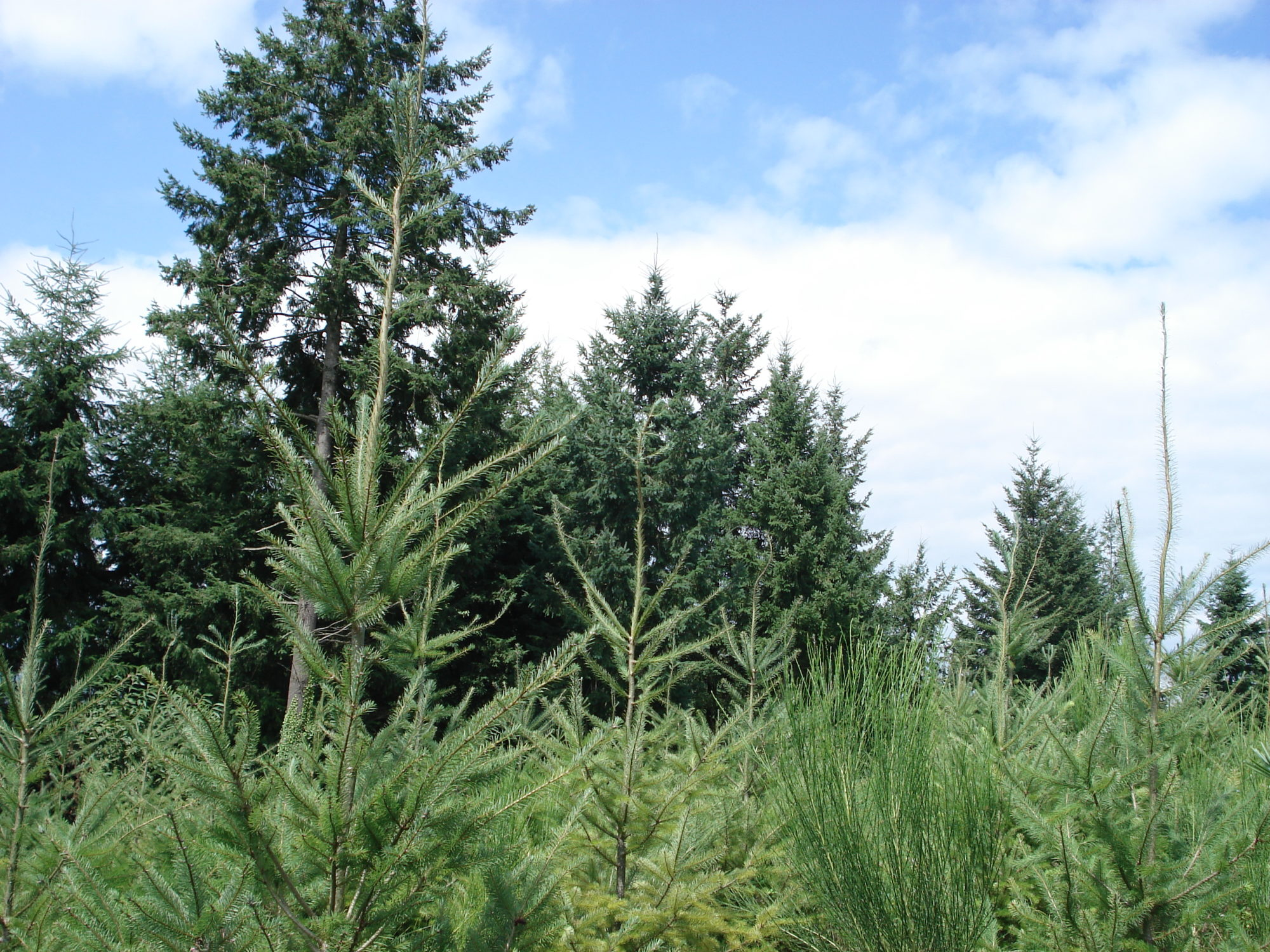 Formations gestion forestière reboisement bois bucheronnage