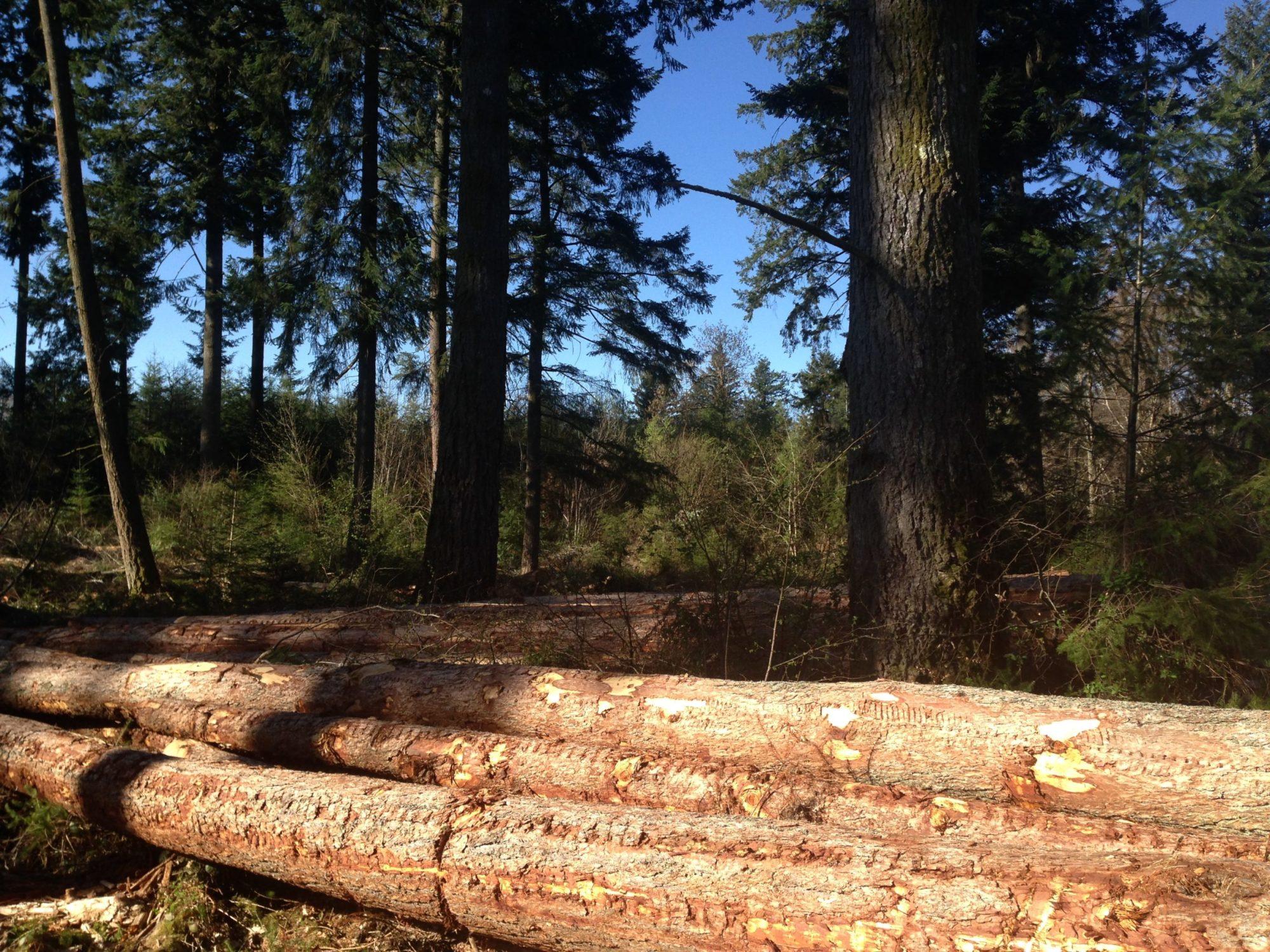 Ventes groupées grumes bois