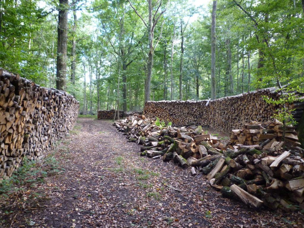 Formation Centre de l'arbre Investissement forestier