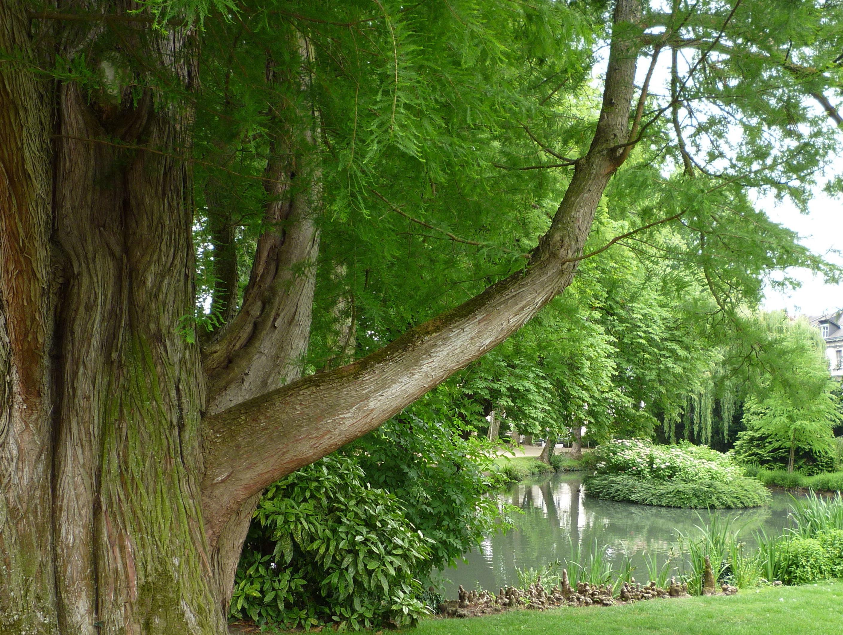 Fonctions valeur arbre Le Centre de l Arbre