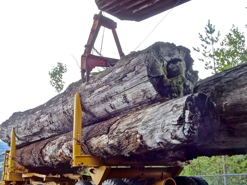 Chantiers forestiers Centre de l Arbre