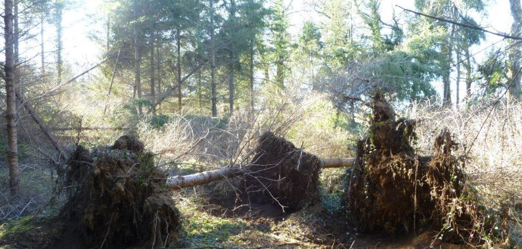 Litige foret tempête expertise Centre de l Arbre