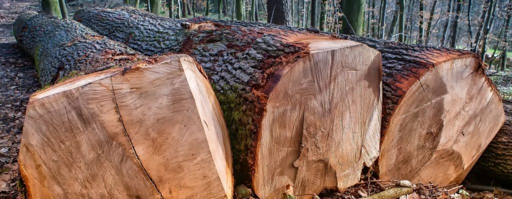 Exploitation forestiere LE CENTRE DE L ARBRE