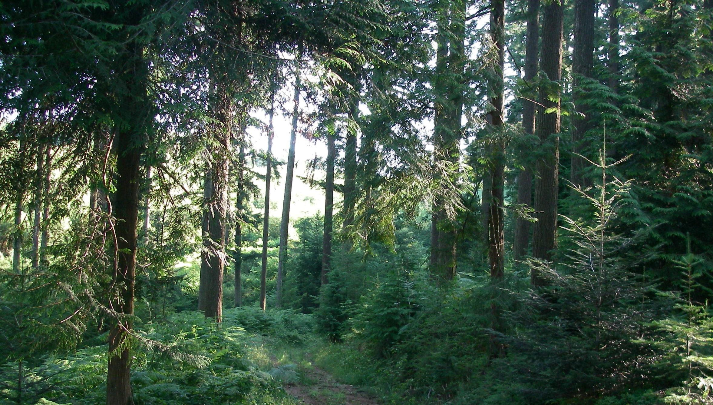 Fiscalite forestiere - Centre de l Arbre